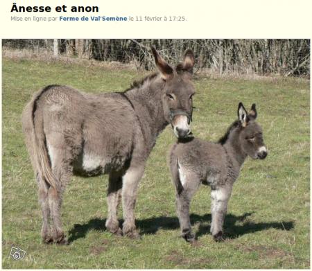 Bonjour je vends mon ânesse et son ânon. L'ânon est une femelle née le 4 février 2014. Comme sa mère elle a la croix de St André. La mère est très maternelle.