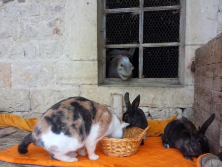 Bon, il n'y a que les lapins qui sont à vendre