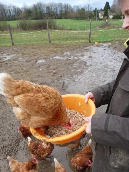 Je connaissais la poule au pot, pas la poule à la bassine