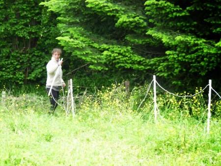 """Après une journée """"au foin"""", Rimelle sera heureuse d'avoir de la bonne herbe."""