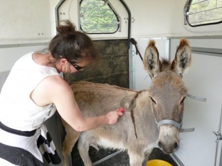 Tiens, elle me mets dans le van pour me brosser ?!?!