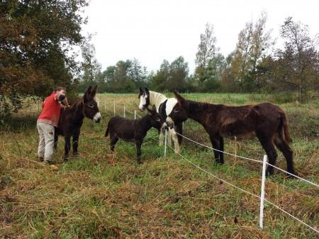 De gauche à droite : D'Artagnan, Dolly, Djinn et Rimelle