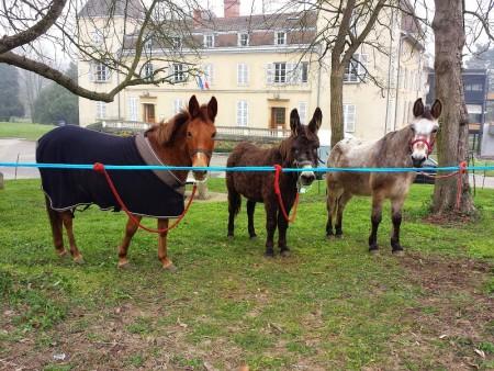 Charlotte la mule, Jappeloup l'âne  et Marquis le mulet.