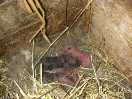 Heureusement que maman à fait un nid, on n'a pas encore de poils